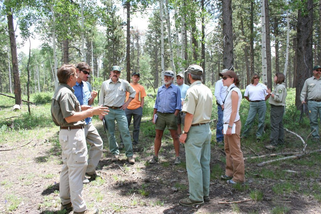 stakeholders meeting in a forest