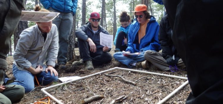 Students collecting data on a forest floor