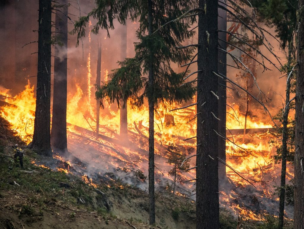 Wildfire burning through trees on a hill