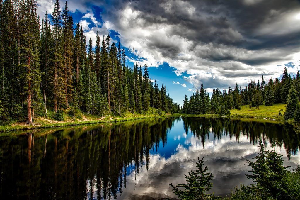 Trees and clouds reflected in a calm lake in a forest
