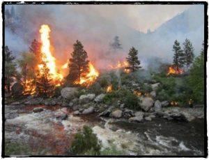 Wildfire burning evergreen trees