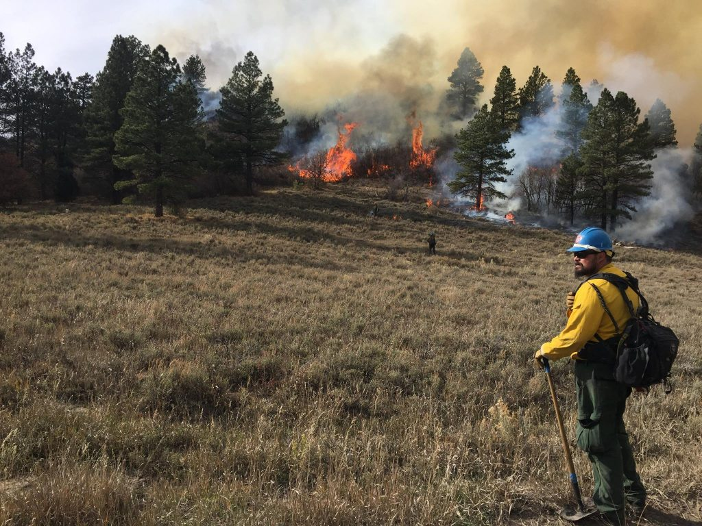 Firefighter watching trees burn