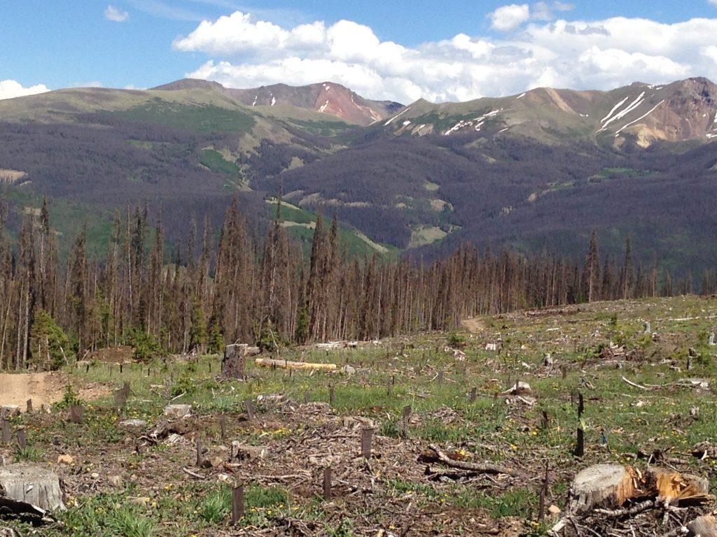 dead trees on mountain hillsides
