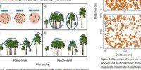 tree density figure