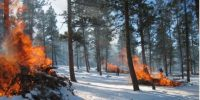 prescribed burn piles on fire