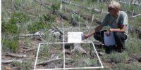 man identifying plants on a field plot