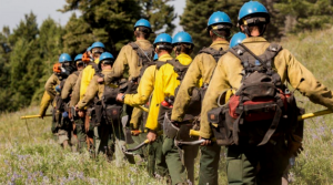 Wildland firefighters walking