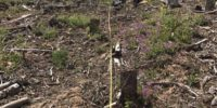 Mattson Et Al Post Sprice Beetle Timber Salvage