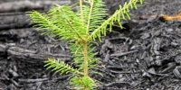 Post Fire Tree Regeneration And Forest Recovery Workshop Summary