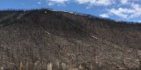 Post-fire Tree Regeneration and Forest Recovery Workshop Summary2