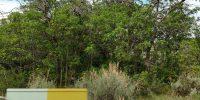 Uncompahgre Plateau CFRLP Sage Oak 1 Year Post Treatment Study Summary Report